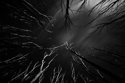 Skeleton Trees Poster