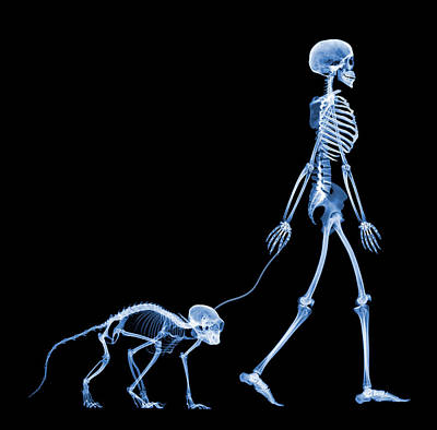 Skeleton Walking A Marmoset, X-ray Poster