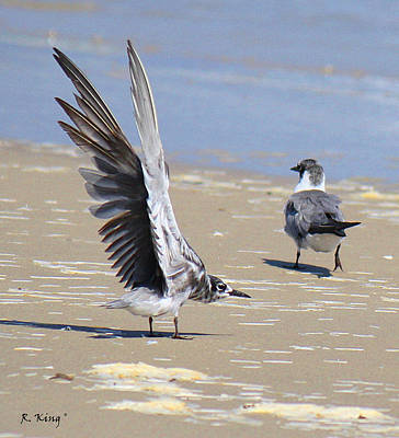 Skiddish Black Tern Poster by Roena King