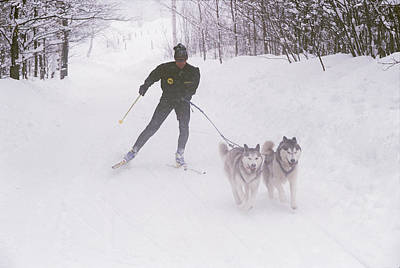 Skijoring In Maine. Model Released Poster by Bill Curtsinger