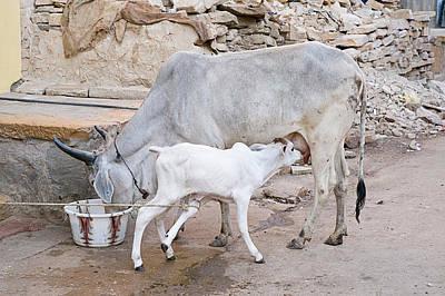 Skn 1654 Feeding Time Poster by Sunil Kapadia