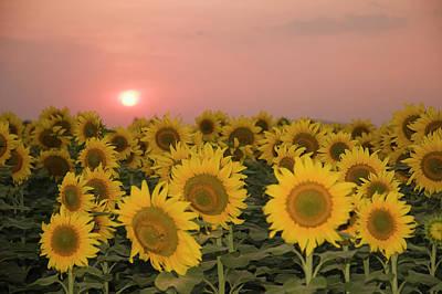 Skn 2179 Sunflower Landscape Poster