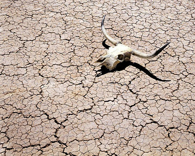 Skull In Desert 2 Poster by Kelley King