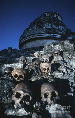 Skulls At Chichen Itza Poster by The Harrington Collection