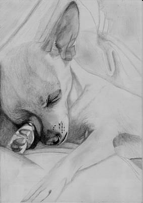 Sleeping Chihuahua Poster by David Smith