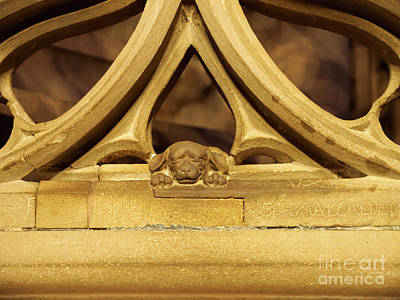 Sleeping Dog In Strasbourg Cathedral Poster