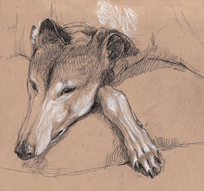 Sleeping Greyhound Poster