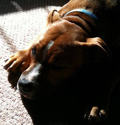 Sleeping In The Sun Poster