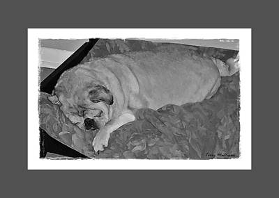 Sleeping Pug In Black And White Poster