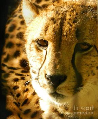 Sleepy Cheetah Cub Poster