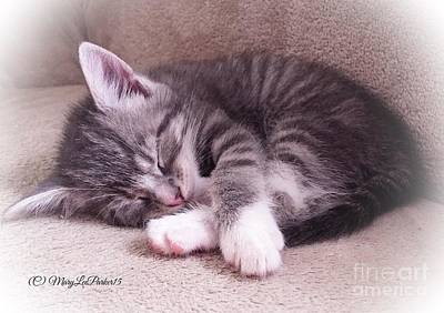 Sleepy Kitten Bymaryleeparker Poster