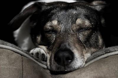 Sleepy Lil Hound Poster