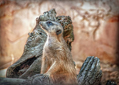 Poster featuring the photograph Slender-tailed Meerkat by Hanny Heim