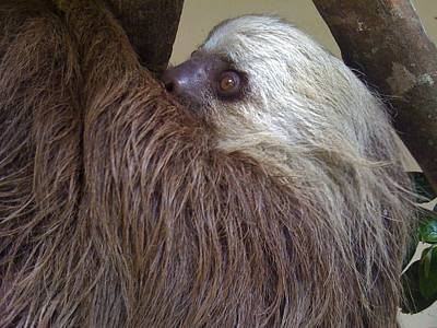 Sloth Poster by Dolly Sanchez