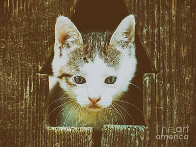 Small Baby Kitty Cat Portrait Poster by Radu Bercan
