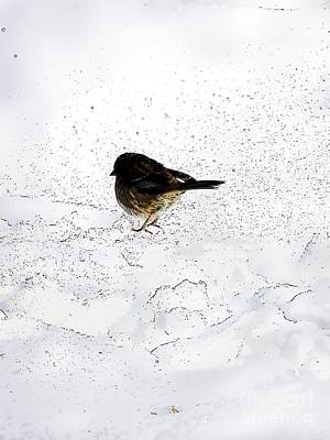 Small Bird On Snow Poster