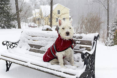 Small Dog Park Bench Snow Storm Poster