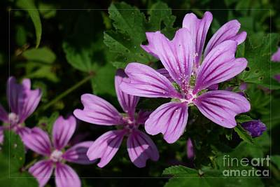 Small Mauve Flowers 6 Poster