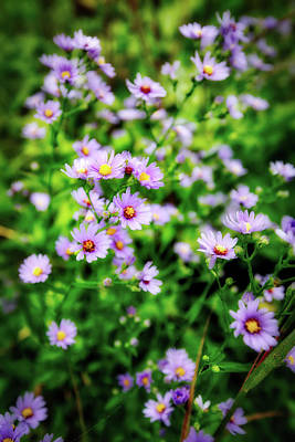 Small Purple Wildflowers Of Wisconsin Poster by Jennifer Rondinelli Reilly - Fine Art Photography
