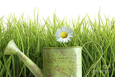 Small Watering Can With Tall Grass Against White Poster
