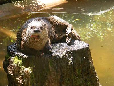 Smiling Otter Poster