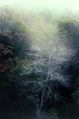Smoky Mountain Trees Poster