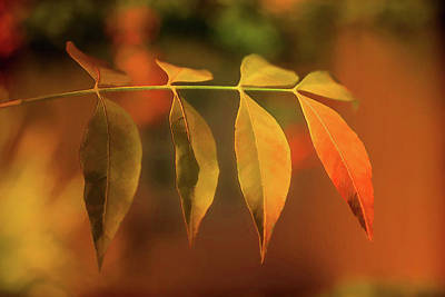 Smooth Autumn Poster