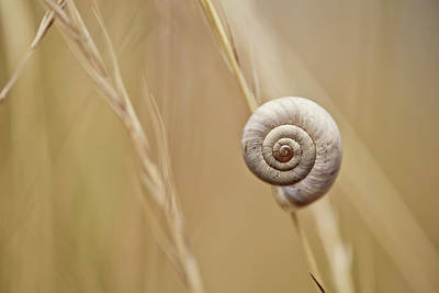 Snail On Autum Grass Blade Poster