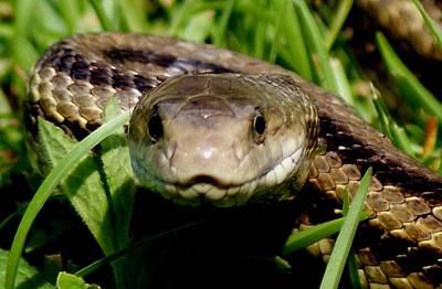 Snake Face Poster