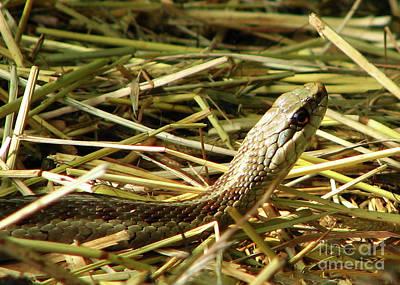 Snake In The Grass Poster by Deborah Johnson