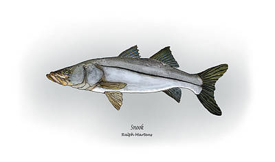 Snook Poster by Ralph Martens