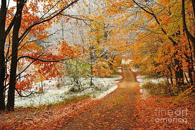 Snow Along Autumn Tree Tunnel Poster by Terri Gostola