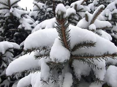 Snow Barren Poster