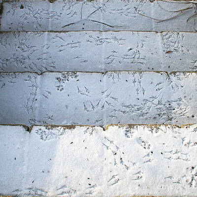 Snow Bird Tracks Poster