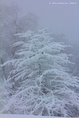 Snow Covered Tree In The Fog Poster