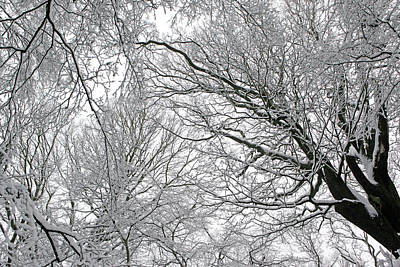 Snow Covered Tree Poster by Richard Newstead