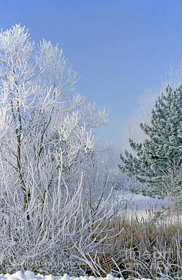 2a357 Snow Covered Trees At Alum Creek State Park Poster