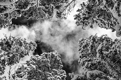 Snow Covered Trees Black And White Poster