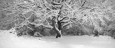 Snow Dusted Tree Poster