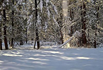 Snow Falling Off Cedars Poster
