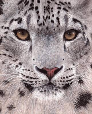 Snow Leopard Face Poster by Rachel Stribbling