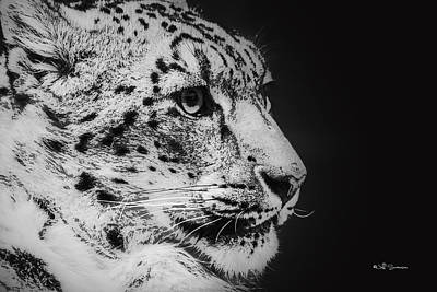 Snow Leopard Poster by Jeff Swanson