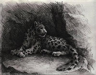 Snow Leopard Poster by Rachel Christine Nowicki