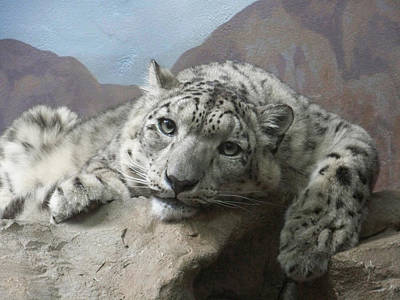 Snow Leopard Relaxing Poster by Ernie Echols