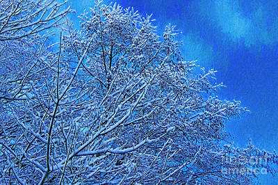 Snow On Branches Photo Art Poster