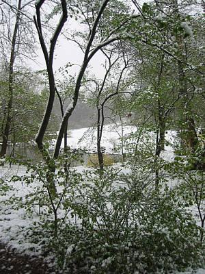 Snow On Spring Buds Poster by Garth Glazier
