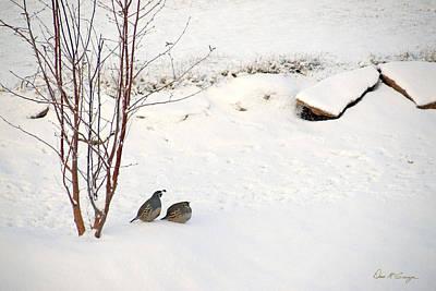 Snow Quail Poster