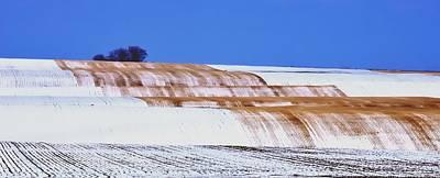 Snow Stubble Tree Line 13955 Poster