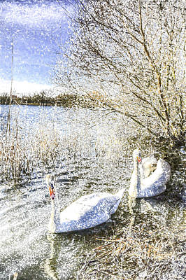 Snow Swans Art Poster by David Pyatt