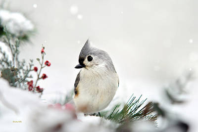 Poster featuring the photograph Snow White Tufted Titmouse by Christina Rollo